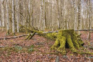 morsch log root nature forest floor tree forest decay