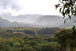 mountain hawaii rainforest plants panoramic scenic maui