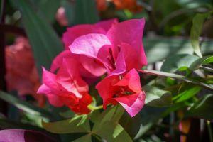natural flowers rainforest tropical plants