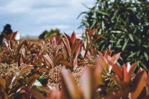 natural spain plants green sky toledo nature
