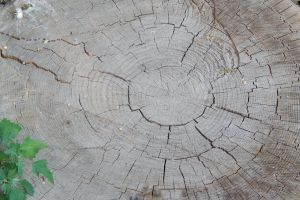 natural wooden felled lumber texture nature stump log forestry wood