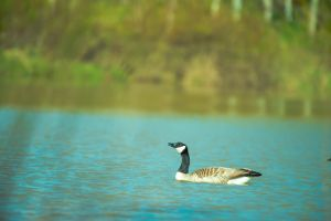 nature animal photography ripples feather environment wildlife depth of field water wild animal blur