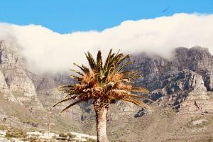 nature cloud tree mountain