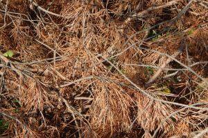nature felled cut stump lumber pattern yard trunk timber mill