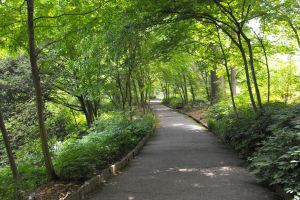 nature foot path trees