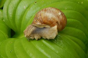 nature healthy food color burgundy summer garden snail background beauty