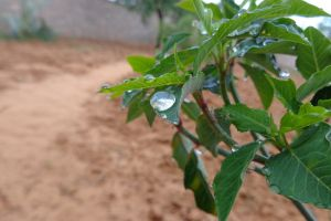 nature mother nature rain drops