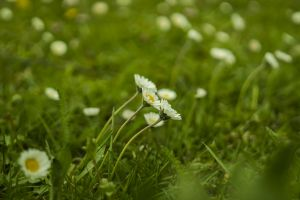 nature rush white juicy wildflowers flowers spring flower grass plant flower meadow