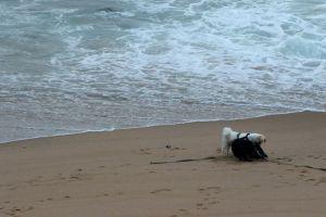 nature swim pet holiday man's best friend friends play animals ocean dogs