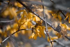 nature yellow flowers sun