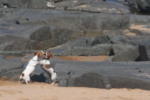 ocean dogs man's best friend dog animals nature beach swim pet holiday