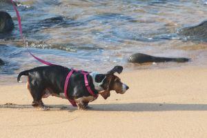 ocean man's best friend beach play pet dog friends swim dogs nature
