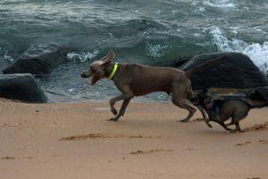 ocean man's best friend holiday beach animals swim friends pet dogs nature