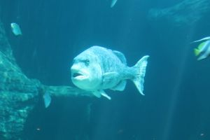 ocean swim colourful aquarium fish animals nature