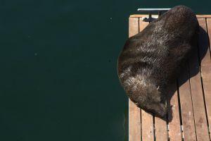 ocean wild animal sleep rest sea water sea animal seal animal funny