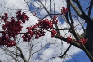 outdoor close-up tree nature spring flower