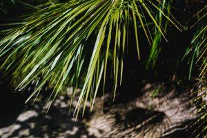 palm tree sochiponia sochifornia blacksea vscosochi beach ñ€ð¾ññð¸ñ sky sochi black sea
