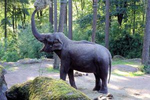 park mammal large elephant animal wildlife zoo