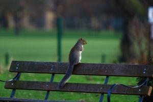 park squirrel wildlife tree bench wood mammal grass people