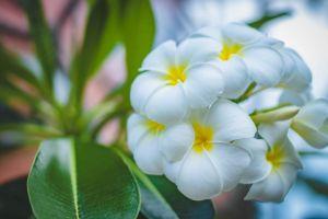 park tropical season botanical delicate zen aromatherapy growth color blur