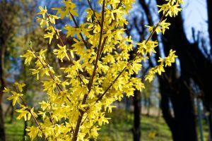 park yellow flowers shrub shrub with yellow flowers trees