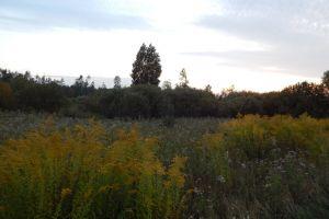 pasture sun farm tree wood sunlight yellow dawn sunset sunrise