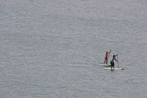 people paddleboard ocean cruise waves harbour durban nature south africa