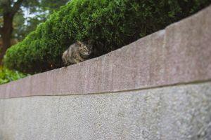 pet hide cat emotional fear eyes green mood plant darkness