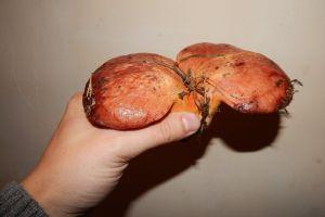 pick hand seasonal food picking nature mushroom fungus edible green