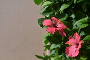 pink flowers flowers green