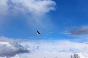 plane super cub blue sky