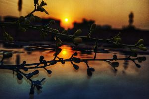 plant mirror sky nature photography love leafs red sky blurred background blurred evening sun