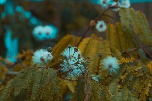 plants macro photography macro nature nikon