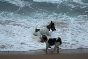 play holiday ocean nature swim beach friends dogs dog pet