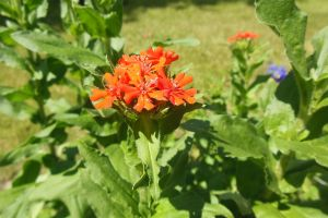 red flower gradening summer