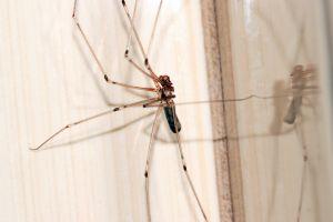reflection animal spider close-up arachnid