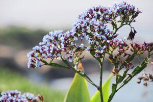 sandiego lajolla beach flower canon5d beautiful summer blue
