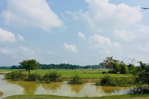 scenic water pond summer trees golf reflection daylight grass environment