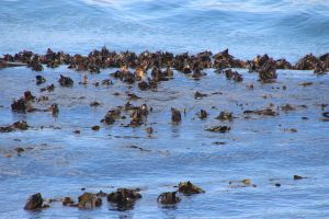 sea background nature ocean rocks waves