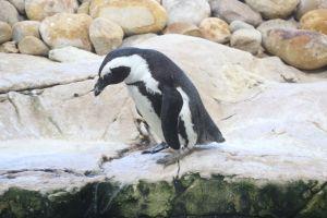 sea penguin cute aquarium ocean animal animals ocean