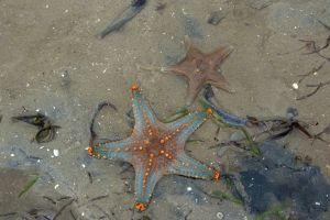 sea sand ocean mozambique beach africa sea star nature animals holiday