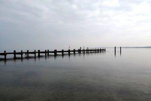 sea seagulls ocean