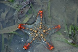 sea star ocean beach holiday nature mozambique animals sea sand africa