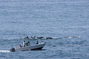 sea wild environmental protection boat animals water ocean waves dolphins wild animals