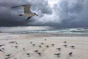 seagull dramatic sky cloudy sky ocean grey sky dark sky bad weather seagulls sky