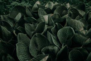 shape close-up texture flora garden grass color field beautiful plants