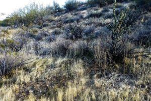 shrub tree desert dry wild wilderness southwest background foothills tall grass
