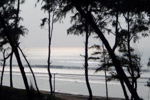 silhouette tree forest seashore sea tree