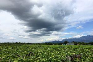sky cloud grapes