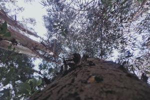 sky tree love